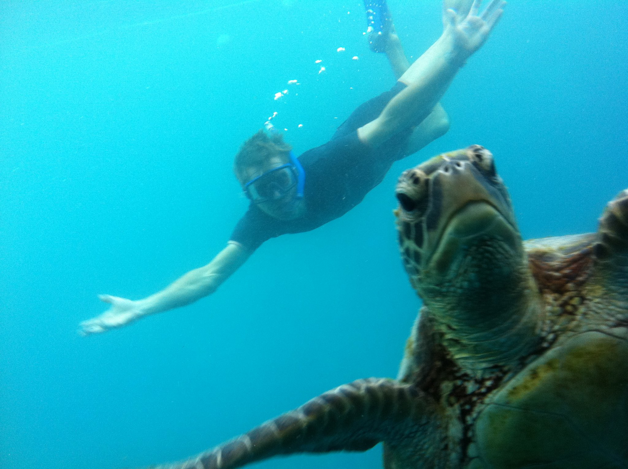 Swimming with a turtle